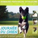 Journée du chien à Hélécine